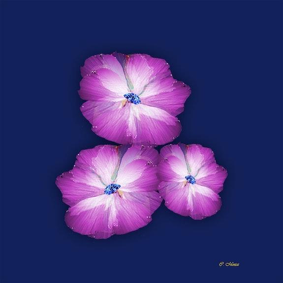 Les 3 fleurs au coeur de diamant. Christiane Mosca Claralie