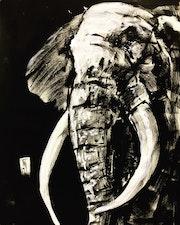Elephant. Taj Mattingly