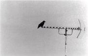 Crow. Sarah Āgathė Salømøn