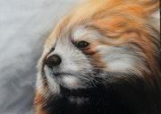 Panda roux. Angelique Joao