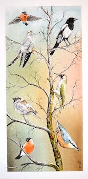 Oiseaux de nos jardins. Gérard Bel