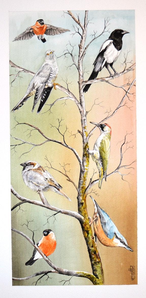 Oiseaux de nos jardins. Gérard Bel Gérard Bel