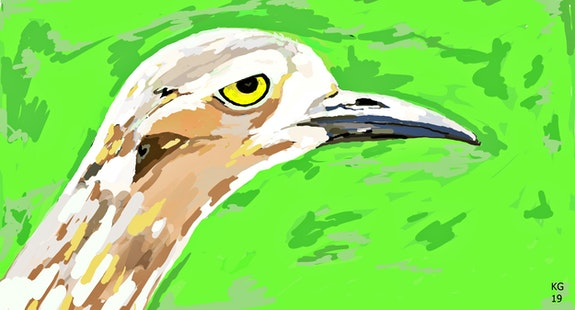 Stone curlew. Keith Goldie Keith Goldie
