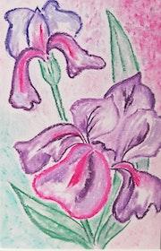 Iris i2. Marinette Dauvilliers