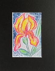 Iris i3. Marinette Dauvilliers
