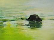 Labrador. David Garnier