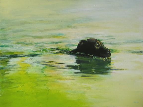 Labrador. David Garnier David Garnier