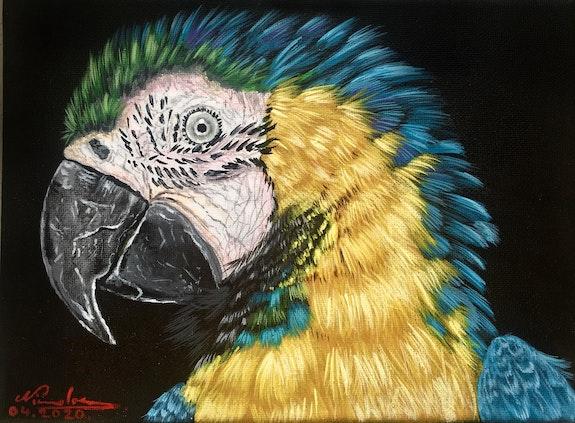 Blue-and-yellow macaw. Nicolae Doru-Andrei