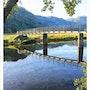 Morning Bridge. David Lacey