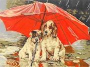 Un coin de parapluie.