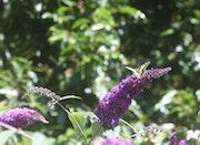 Les vacances, y'a du soleil et des… Papillons. Ici c'est un Machaon. Nathalie Hochard-Gaudry