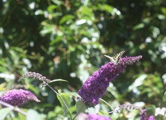 Les vacances, y'a du soleil et des… Papillons. Ici c'est un Machaon. Nathalie Hochard-Gaudry Nathalie Hochard-Gaudry