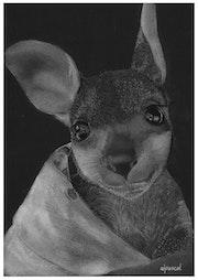 Kangourou. Wpascal