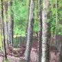 Les chênes de la forêt de Tronçais. Catherine Souet-Bottiau