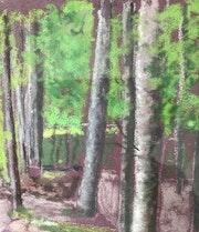 Les chênes de la forêt de Tronçais.