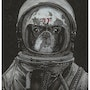 Space Frenchie. Wpascal