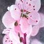 En fleurs. Ralph. Art