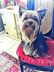 Notre chien Picasso.