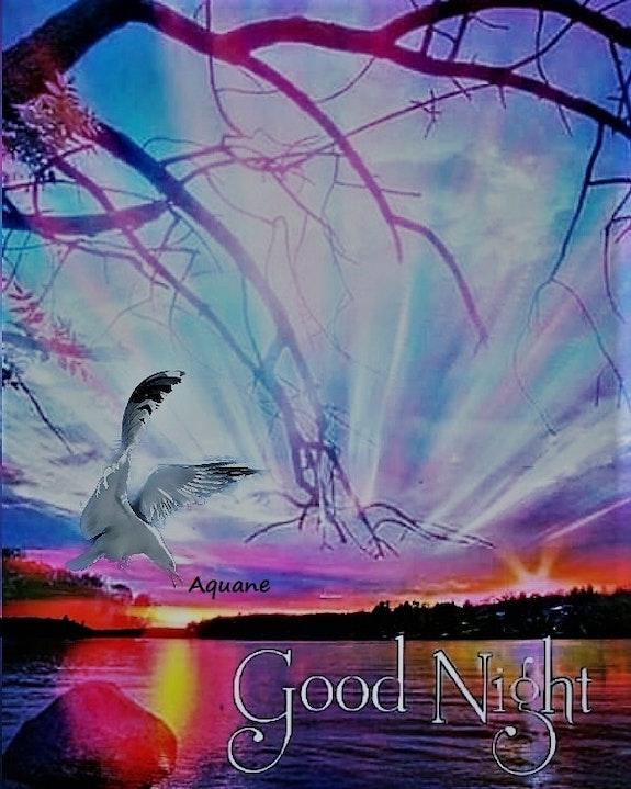 Good night. Aquan Aquan