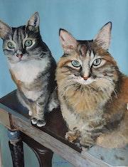 Los gatos de mi hija.