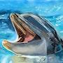 Dolphin. Kati