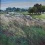 Bruyères et rochers. Daniele Trigalet