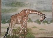 Une giraffe.
