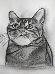 Meow interrogatif.
