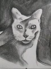 Meow beauté.