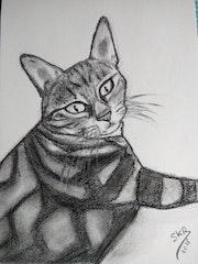 Meow espiègle.