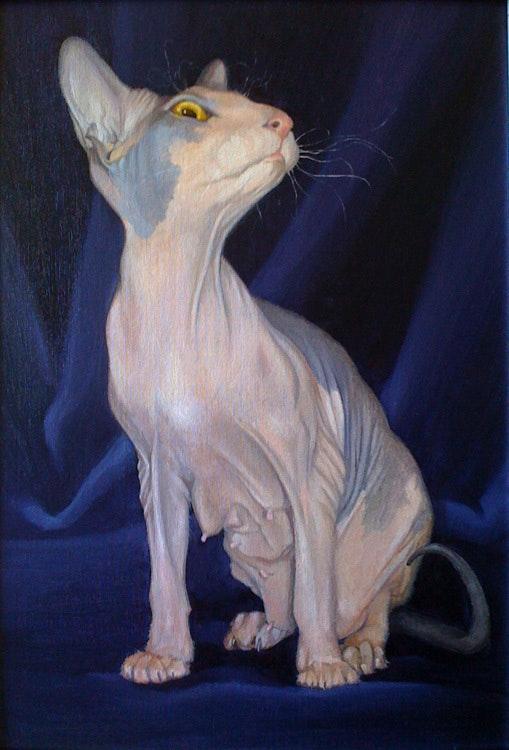 She cat Bonza. Alan Albegov Alan Albegov
