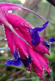 Flor de aire.