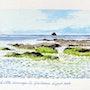 Bretagne 2019 la côte sauvage de Quiberon. Laulpic