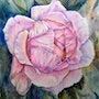 Rose for Maria - watercolor.