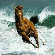 Serie caballo a7. Agustin Bejarano Rodriguez