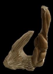 Aqua. Karl Artiste Sculpteur