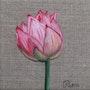 Jeune Lotus. Patricia De Chadois