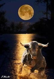 Toro y luna.