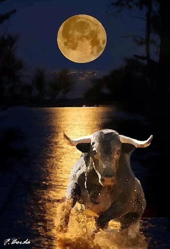 Toro y luna. Frannes Borda Fran Nes Borda Calsin