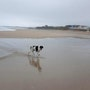 Mi perro, Xu en la playa. M. Pilar