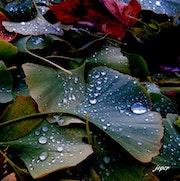 Trois gouttes de pluie et puis s'en vont !.