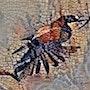 2019-08-28 Mosaïque guépier d'Europe mangeant une libellule. Michel Normand