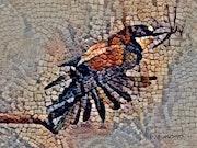 2019-08-28 Mosaïque guépier d'Europe mangeant une libellule.