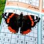 Papillon qui voulait faire un sudoku. Dco La Fée Castalia