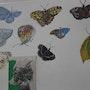 Planche de Papillons. Catherine Souet-Bottiau