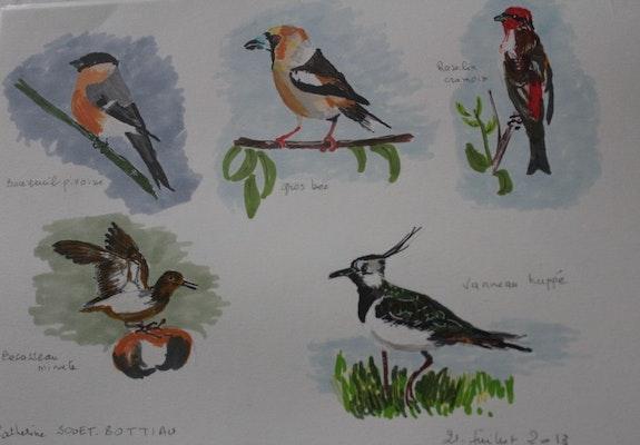 Planche d'oiseaux de nos régions. Catherine Souet-Bottiau Catherine Souet-Bottiau