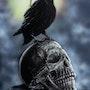 Skull. Angelique Joao