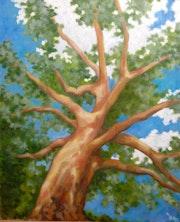 Caribbean tree.