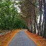 Bonita carretera al Mazo de Santa Comba, Lugo. M. Pilar