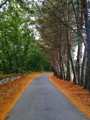 Bonita carretera al Mazo de Santa Comba, Lugo.
